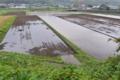 [田んぼ][田][水田][田園][雨天]田んぼ