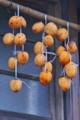 [干し柿][柿][吊るし柿][軒下]干し柿