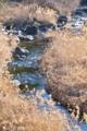 [増田川][増田川ダム][一級河川][群馬県][安中市]増田川