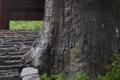 [老杉][石段][随神門][参道][妙義神社]老杉