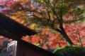 [北門][イロハモミジ][紅葉][影向岩][妙義神社]北門