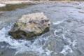 [碓氷川][利根川水系][一級河川][清流][岩]碓氷川