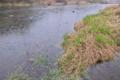 [九十九川][利根川水系][碓氷川支流][一級河川][雨天]九十九川