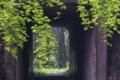 [登山口][トンネル][イロハモミジ][山道][登山道]登山口