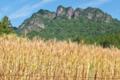 [白雲山][山麓][麦畑][麦穂][妙義山]白雲山