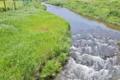 [九十九川][アシ原][利根川水系][碓氷川支流][一級河川]九十九川