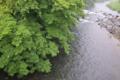 [碓氷川][利根川水系][一級河川][雨][増水]碓氷川