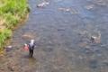 [碓氷川][釣り人][アユ釣り][鮎釣り][友釣り]碓氷川