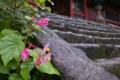[シュウカイドウ][随神門][夕立ち][ピンク色の花][妙義神社]シュウカイドウ
