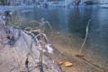 [碓氷川][一級河川][利根川水系][清流][碓氷製糸]碓氷川