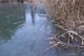 [貯水池][全面結氷][ため池][凍結][アシ原]貯水池