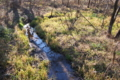 [三の沢][湿地][湿地帯][湿原][丹生湖]三の沢