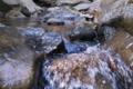 [矢崎川][谷川][ミソサザイ][碓氷川支流][利根川水系]矢崎川