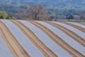[コンニャク畑][蒟蒻畑][丘陵][土壌消毒][マルチシート]コンニャク畑