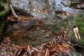[大牛川][清流][せせらぎ][水源][妙義神社]大牛川