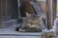 [猫][ネコ][ねこ][民家][集落]猫