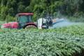 [コンニャク畑][コンニャク][こんにゃく畑][蒟蒻畑][トラクター]コンニャク畑