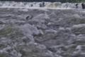 [碓氷川][濁流][秋雨前線][増水][堰堤]碓氷川