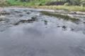[碓氷川][一級河川][利根川水系][清流][カワセミ]碓氷川