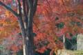 [紅葉狩り][紅葉][モミジ][もみじ][妙義神社]紅葉狩り