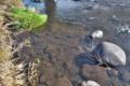 [九十九川][碓氷川支流][利根川水系][一級河川][小川]九十九川