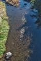 [後閑川][小川][小魚][九十九川支流][碓氷川水系]後閑川