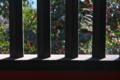 [椿][連子窓][連子][随神門][妙義神社]椿