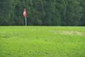 [グリーン][芝][ゴルフ場][カントリークラブ][立夏]グリーン
