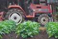 [ジャガイモ畑][じゃがいも畑][ジャガイモ][農具小屋][トラクター]ジャガイモ畑