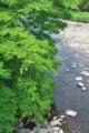 [碓氷川][利根川水系][一級河川][清流][ムクノキ]碓氷川
