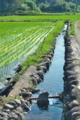 [田んぼ][水田][農業用水][用水路][水路]田んぼ