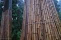 [御神木][境内][老杉][パワースポット][妙義神社]御神木