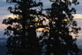 [夜明け][朝焼け][御神木][老杉][妙義神社]夜明け