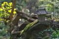 [秋の境内][祠][トチノキ][黄葉][妙義神社]秋の境内