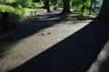 [伸びる影][影][登山道][参道][妙義神社]伸びる影