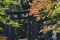[銅鳥居][鳥居][イロハモミジ][紅葉][妙義神社]銅鳥居