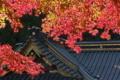 [本社 拝殿][イロハモミジ][紅葉][白雲絵巻][妙義神社]本社 拝殿