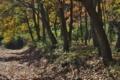 [雑木林][林道][コナラ][コナラ林][ブナ科]雑木林