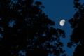 [月][月夜][月光][杉][妙義神社]月