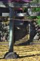 [参道][鳥居][銀杏][落ち葉][袈裟石大権現]参道