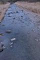 [碓氷川][利根川水系][一級河川][清流][あさお吊り橋]碓氷川