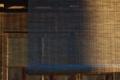 [しだれ桜と灯籠の影][札所][すだれ][朝日][妙義神社]しだれ桜と灯籠の影