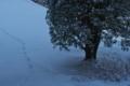 [雪化粧の境内][キンモクセイ][金木犀][狐][妙義神社]雪化粧の境内