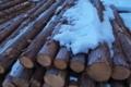 [伐採木][杉][スギ][間伐材][残雪]伐採木