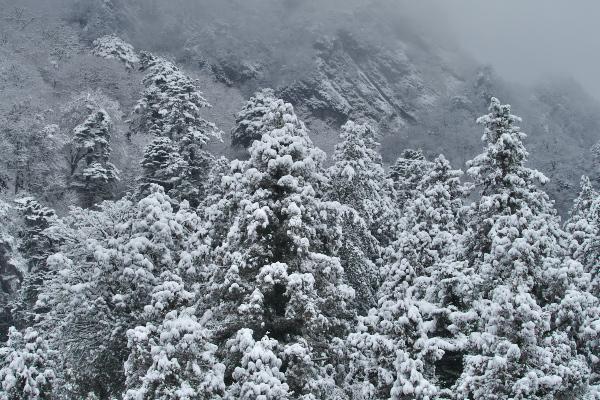 [雪雲の中][雪雲][雪][スギ][妙義神社]