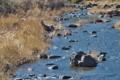 [入山川][中流][清流][碓氷川支流][利根川水系]入山川