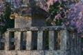 [墓所][長清法印][しだれ桜][石塔寺][妙義神社]墓所