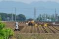 [コンニャク畑][こんにゃく畑][植え付け][榛名山][中野谷]コンニャク畑