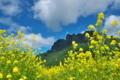 [白雲山][妙義山][菜の花畑][雲][妙義ふるさと美術館]白雲山