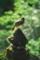 [][][]カオジロガビチョウ